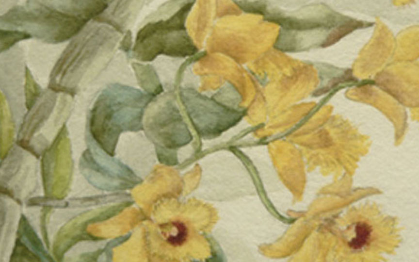 close of photograph of a flower print. the print features several yellow flowers all originating from the same leafy stem, in bloom.