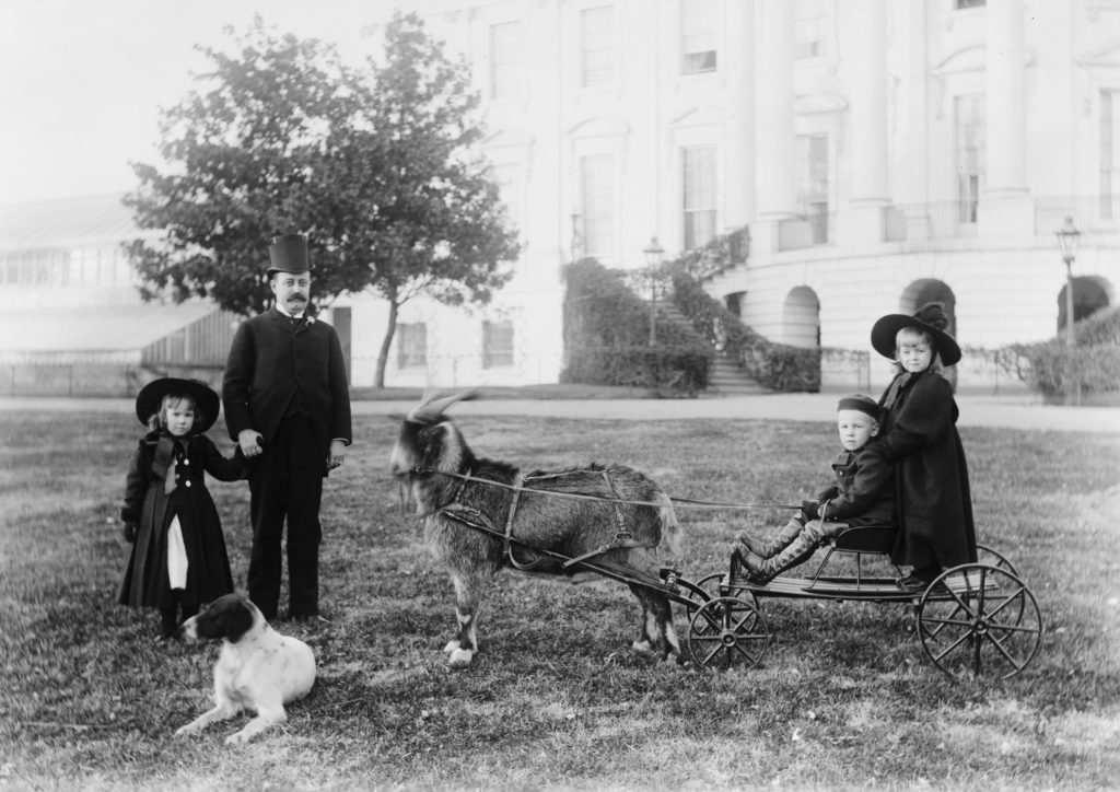 Photograph from 1888 of Old Whiskers, Benjamin Harrison's family goat, pulling Baby McKee in a wagon across the presidential lawn. Also featured are Benjamin Harrison's other children and his pet dog.